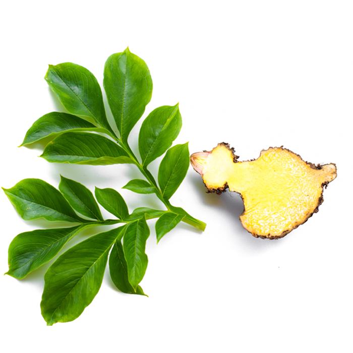 fill-my-tummy-slim-boost-konjac-plant
